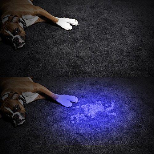TaoTronics Pet UV Urine Stain Detector BlacklightFlashlight Find stains on Carpet Rugs leds